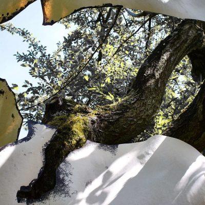 Tree mind 3 version 2 (40x56) Photographie 1/10 sur Dibond et encadrée bois naturel M.C Palombit