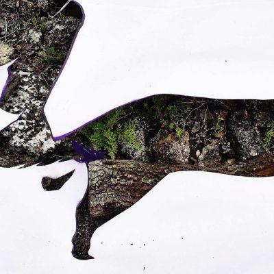Wild dog 2 version 2 (35x75) Photographie 1/10 sur Dibond et encadrée bois naturel